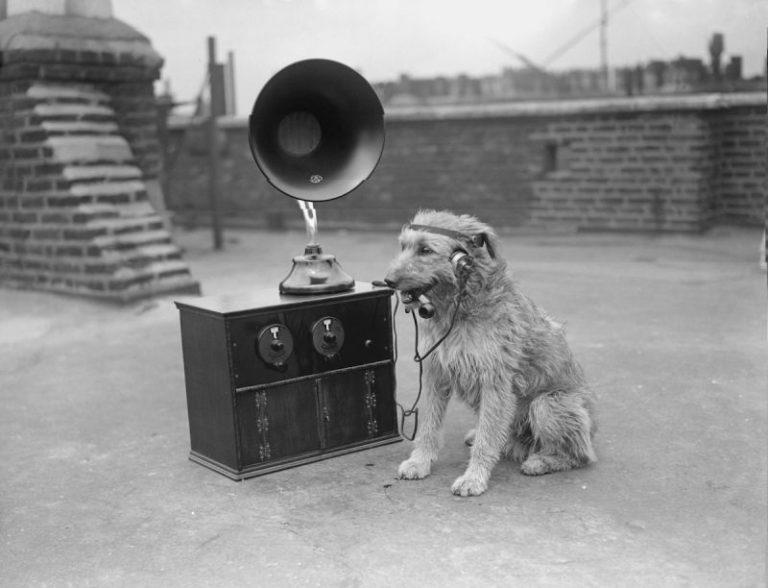 Dog Radio Pipe